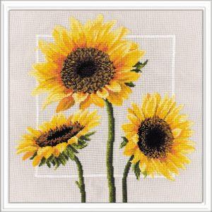 562-Cveti-solnca