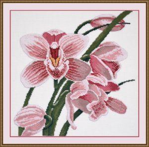 762-Zov-orhidei