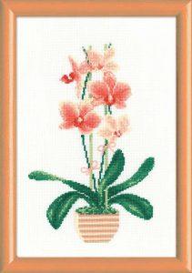 1161-Jeltaya-orhideya