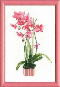 1162-Rozovaya-orhideya