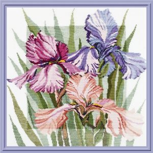 341-Cvetyshie-irisi