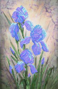 art.-4021-Sinie-irisi