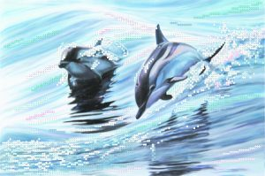 art.-4040-Delfini