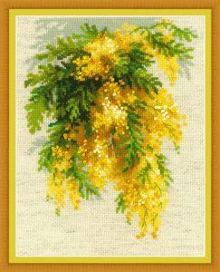 1615-Mimoza
