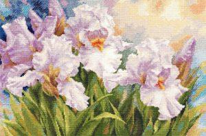 2-36-Belie-irisi