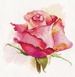 2-39-Dihanie-rozi-ocharovanie